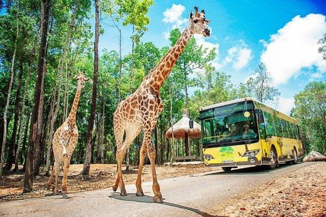 Vinpearl Safari - Vườn thú lớn nhất việt nam tại Phú Quốc