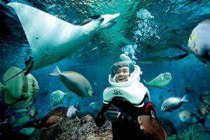Đến Phú Quốc đi bộ dưới đáy biển