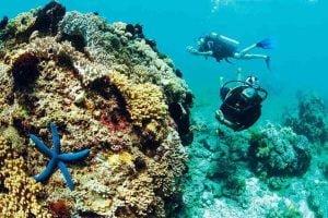 Những thông tin cần biết trước khi mua tour du lịch lặn ngắm san hô Phú Quốc