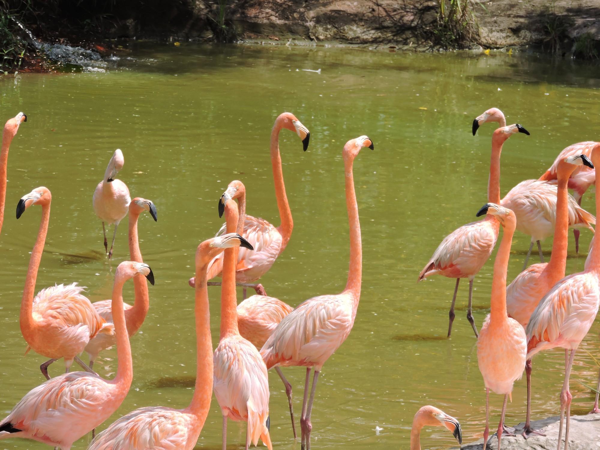 Hồng Hạn Lớn Safari Phú Quốc