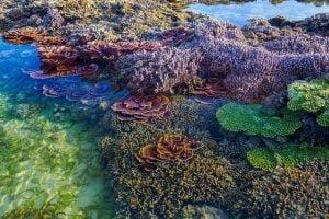 Đi bộ dưới biển và ngắm rặng san hô rực rỡ sắc màu tại Phú Quốc